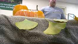 Kingwood Center Explains Science Behind Leaf Color Changes
