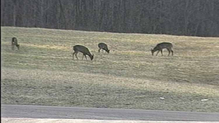 Uptick In Deer-Related Accidents Projected For October